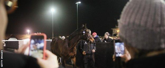 Frankel fans take snaps of a foal under the floodlights