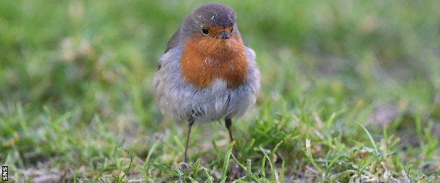 A robin on the pitch at the Caledonian Stadium