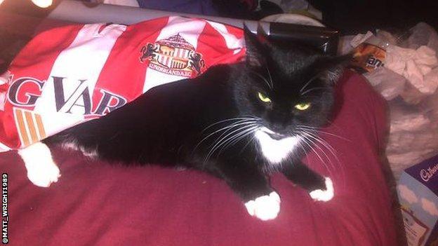 Jessie the Black Cat