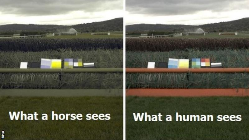 Yellow makeover to help horses see jumps in horserace trial