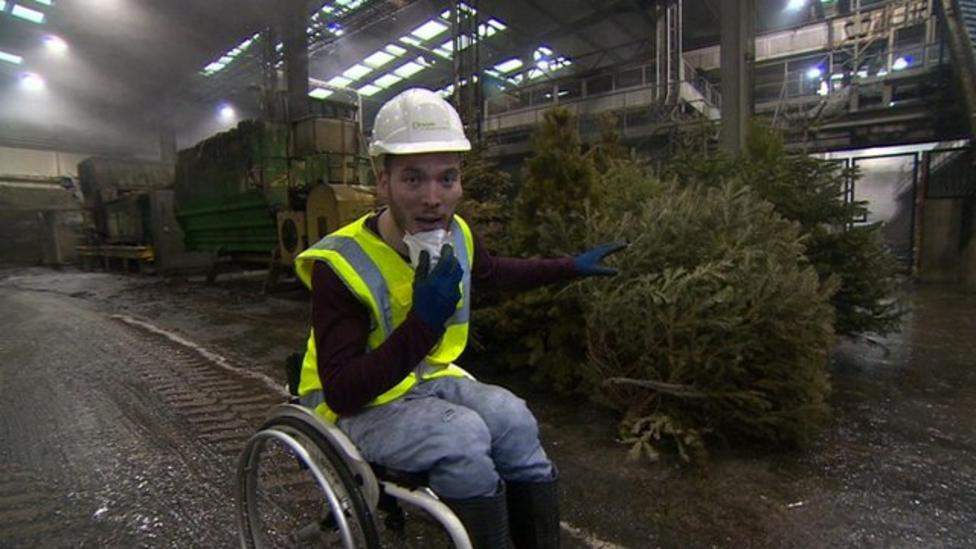 Christmas tree recycling: What is best for the environment?