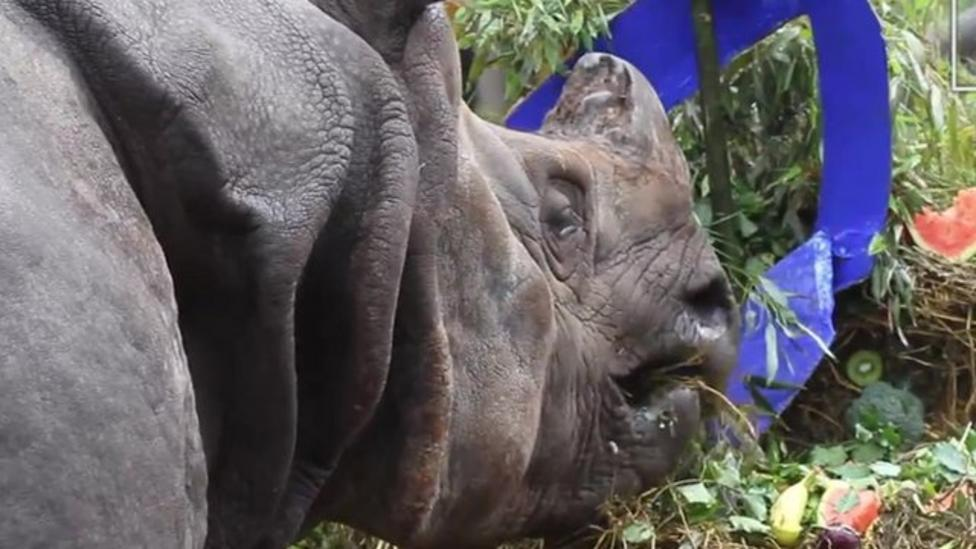 What happens at a rhino birthday party?