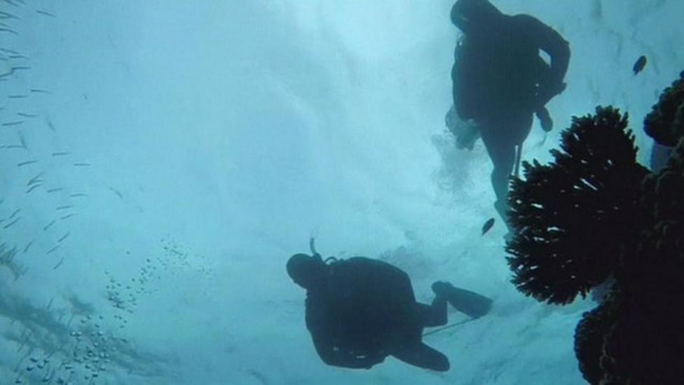 Divers protecting Great Barrier Reef