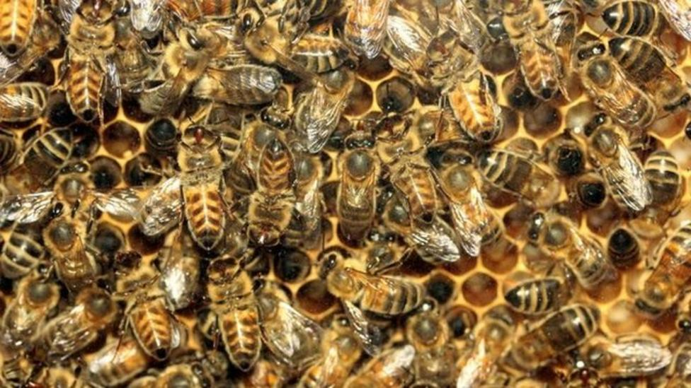 Why are Queen bees being stolen?