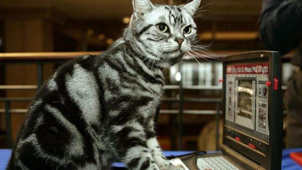 How did cats take over the Internet?