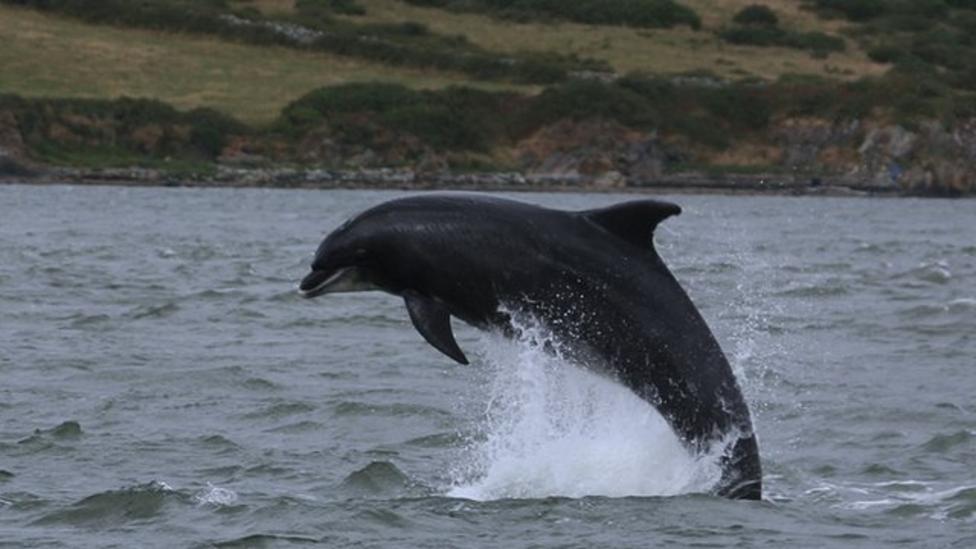 Dolphin spotting in Cardigan Bay