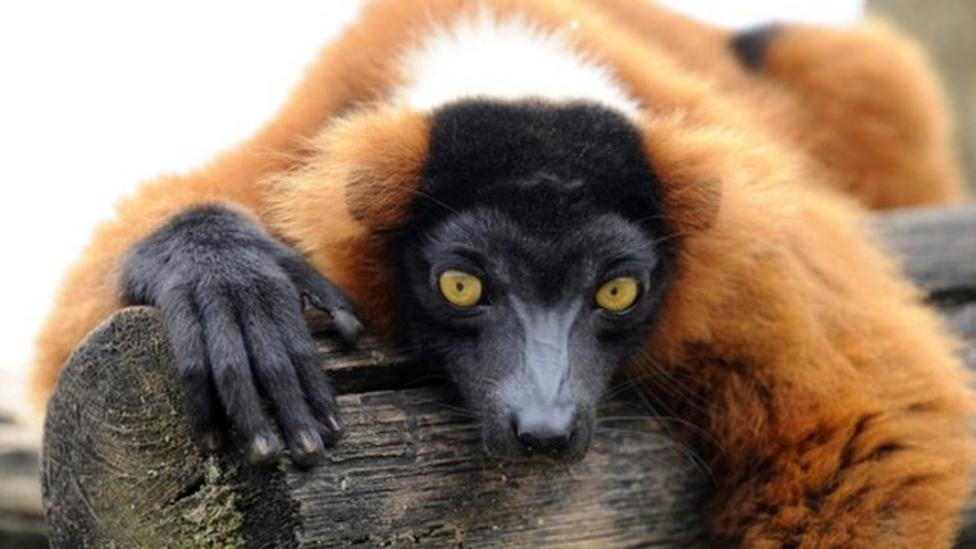 Primates need protecting scientists warn