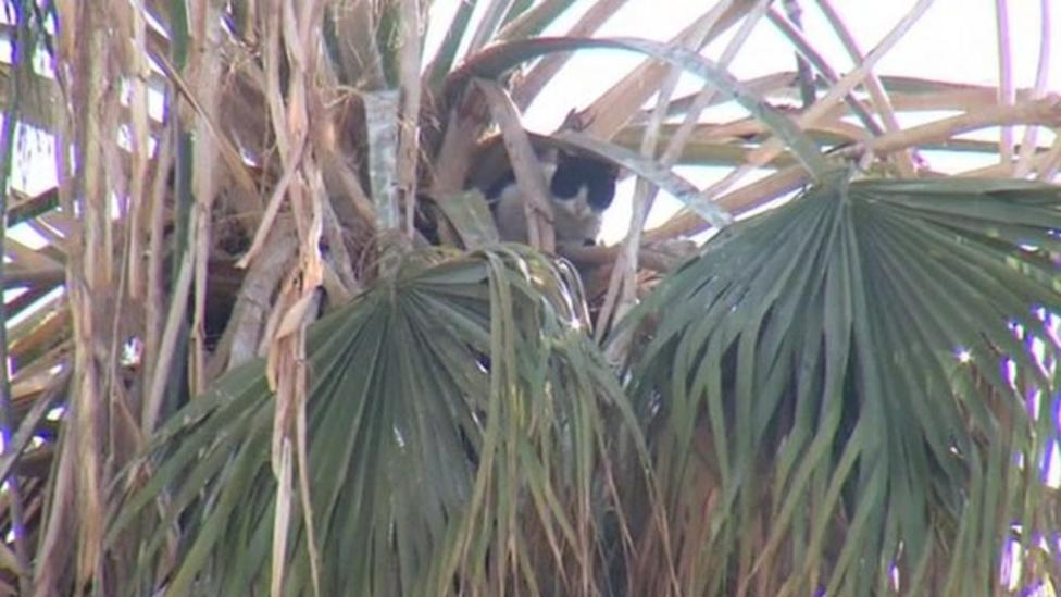 Cat rescued from on top of palm tree