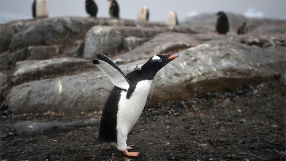 Tracking penguins on CCTV