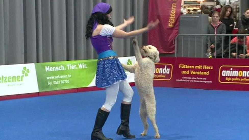 Dogs dance in world championships