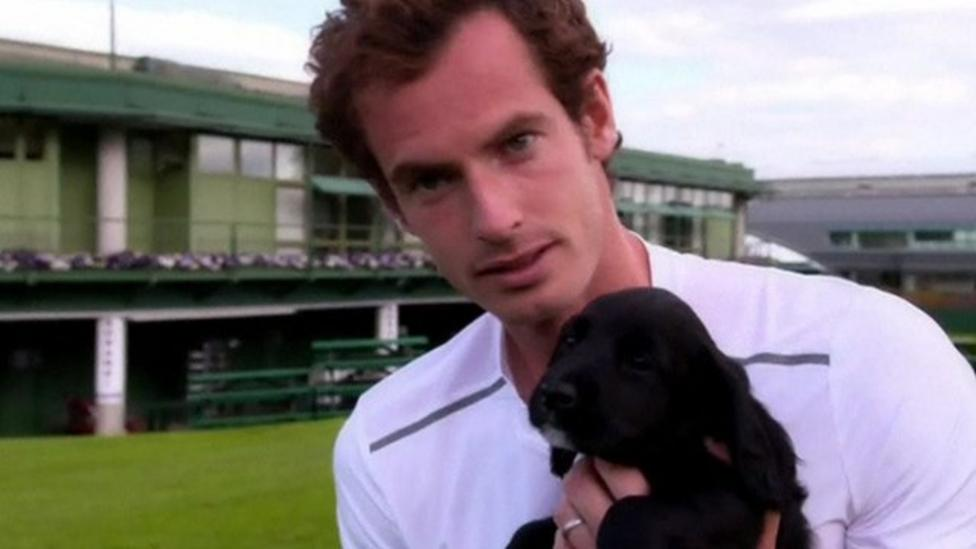 Andy Murray meets sniffer dog pups