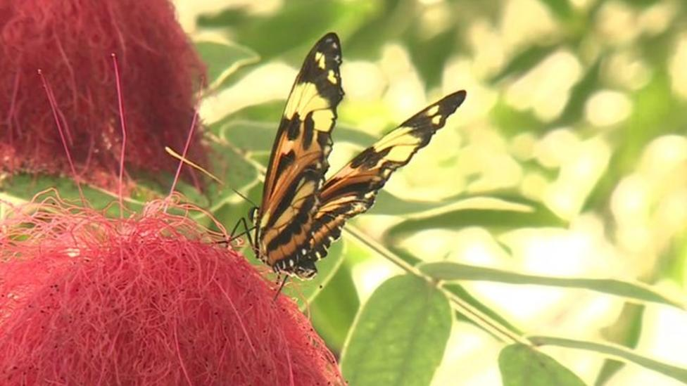 Butterfly glasshouse opens