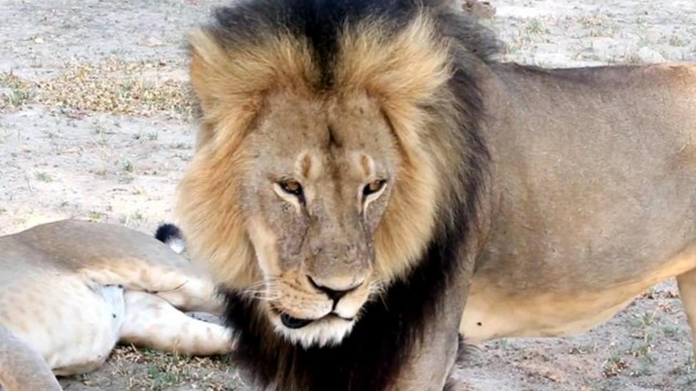 Cecil the Lion donations reach £500,000