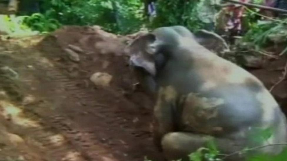 Baby elephant rescued from hole