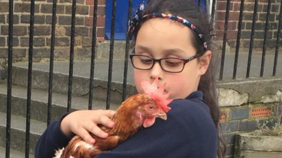 Farm takes over a London school