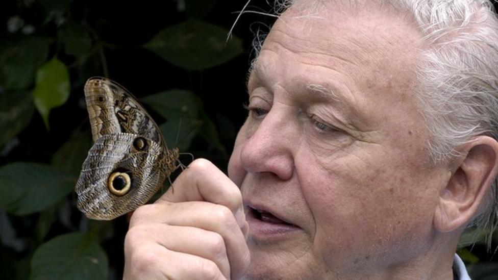 Attenborough starts butterfly count