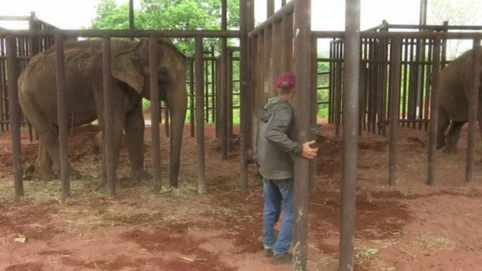 Asian elephants get a new home