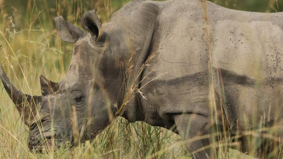 Thieves jailed for stealing rhino horn