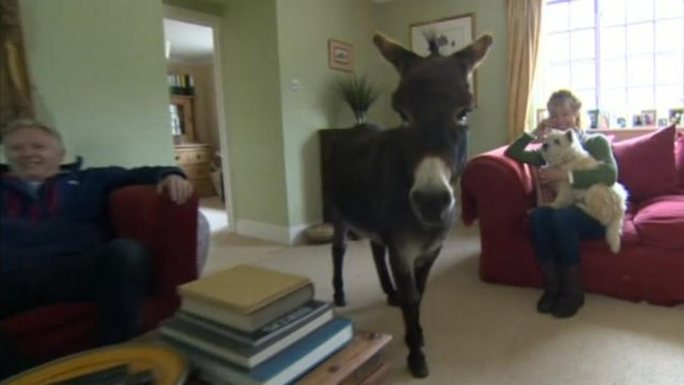 The donkey who thinks he's a dog