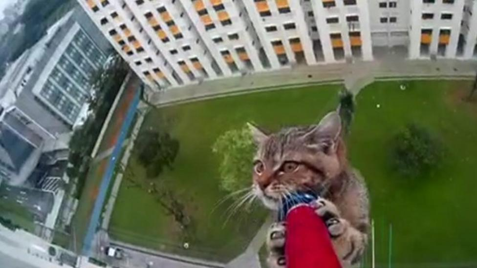 Lucky cat rescued from tower 12 floors high