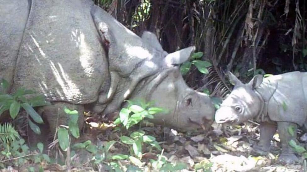 Rare baby rhinos caught on camera