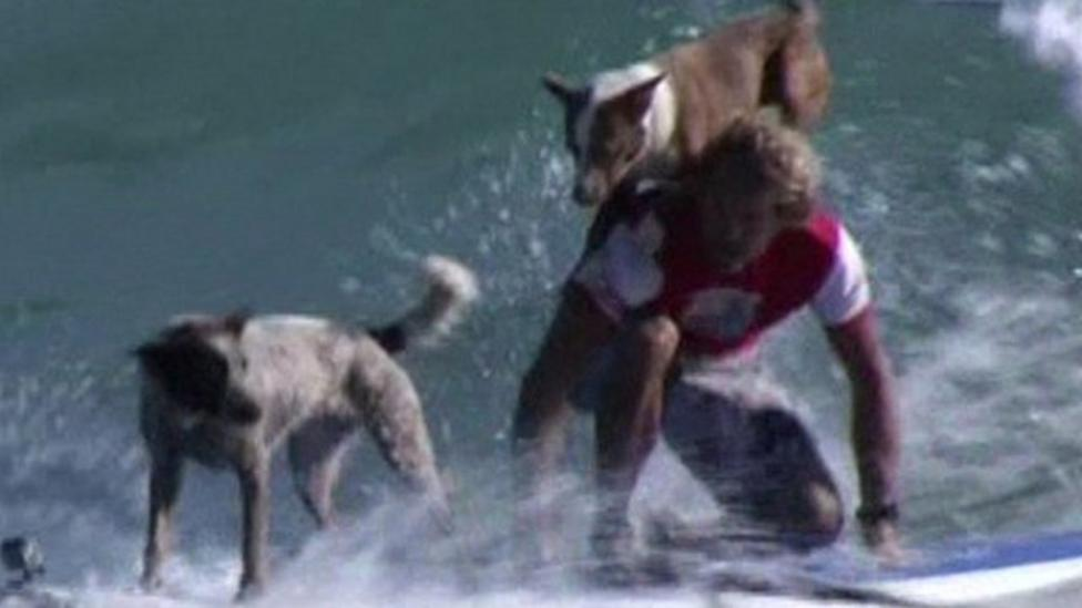Surfing dogs train pet owners