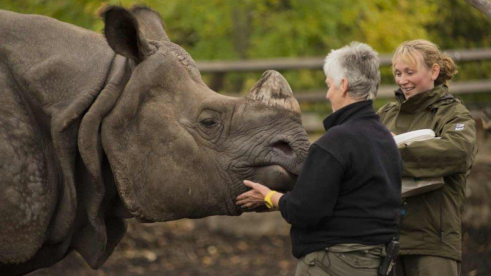 Zookeepers trying to help save rhinos