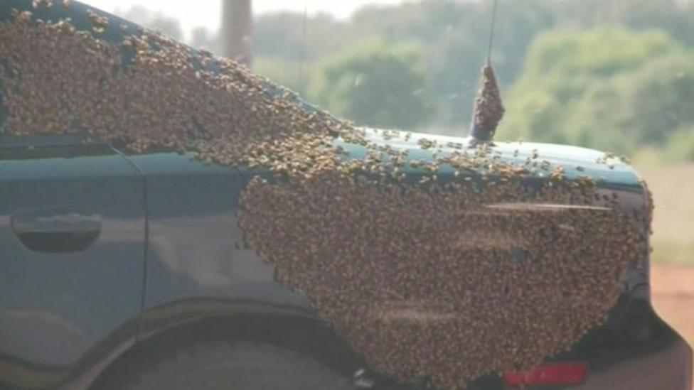 Swarm stops traffic on US motorway