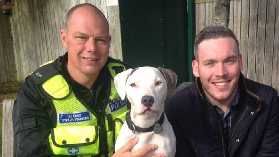 Staffy sniffer dogs helping the police fight crime - CBBC