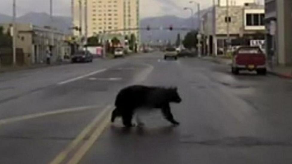 Bear on the run in US city