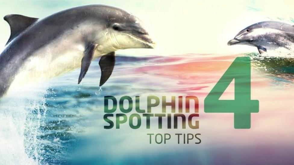 Top tips for spotting dolphins