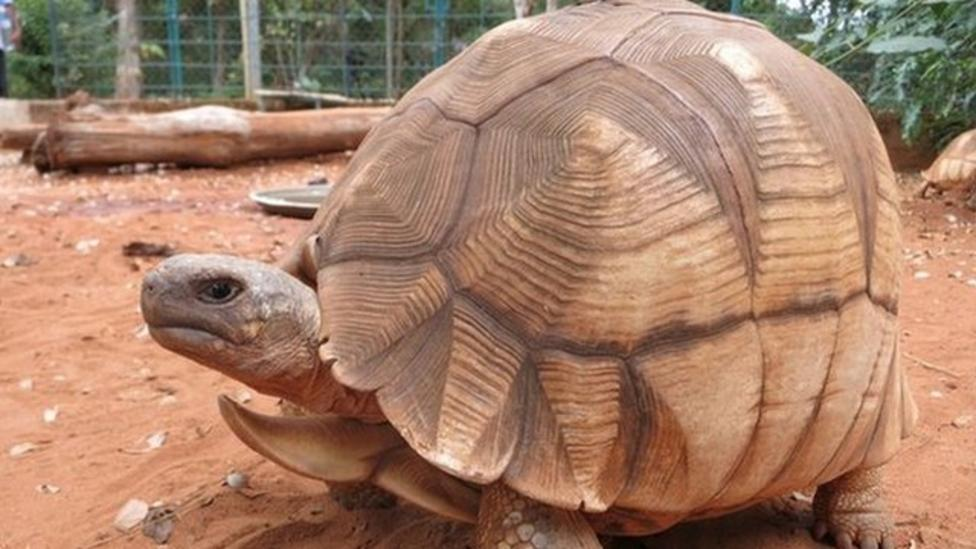 Rare tortoise has shell scratched to survive