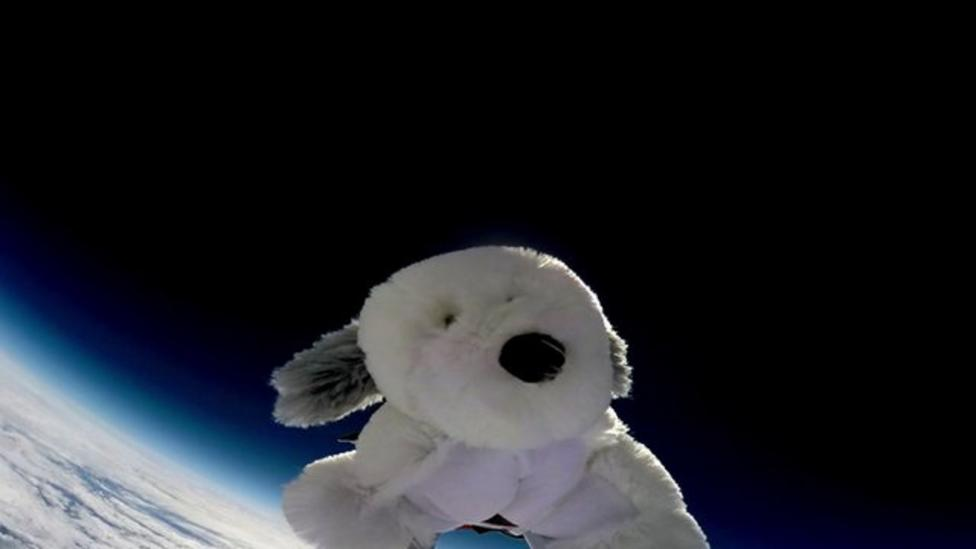 Cuddly toy goes missing after space flight