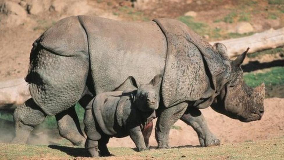 Spy-cam used to fight rhino poaching