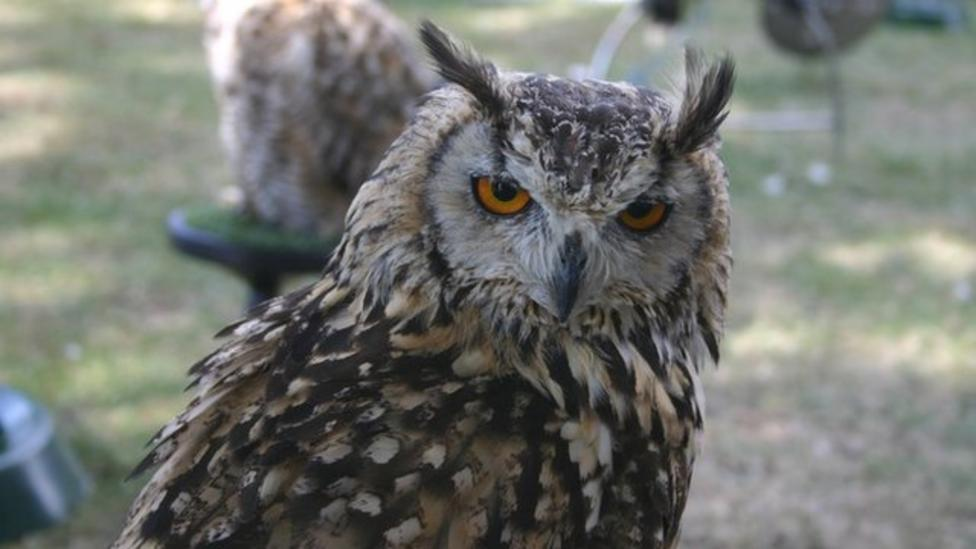 How owls sneak up silently on their prey