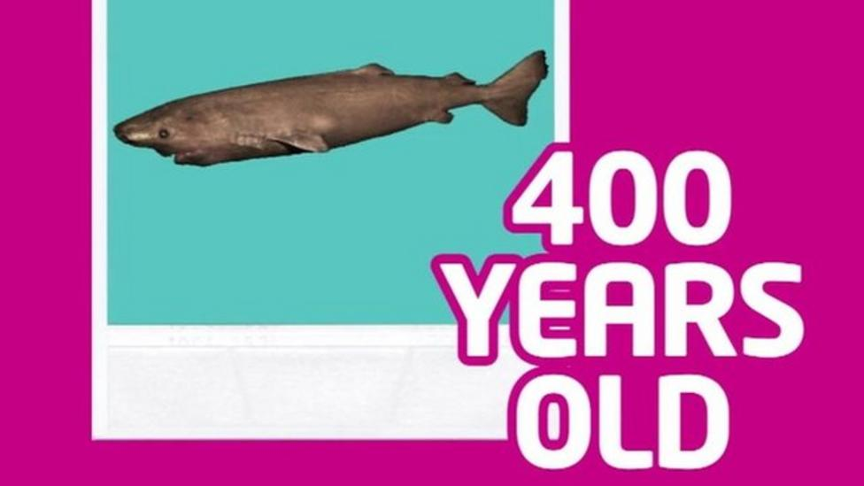 The 400-year-old shark and other old things