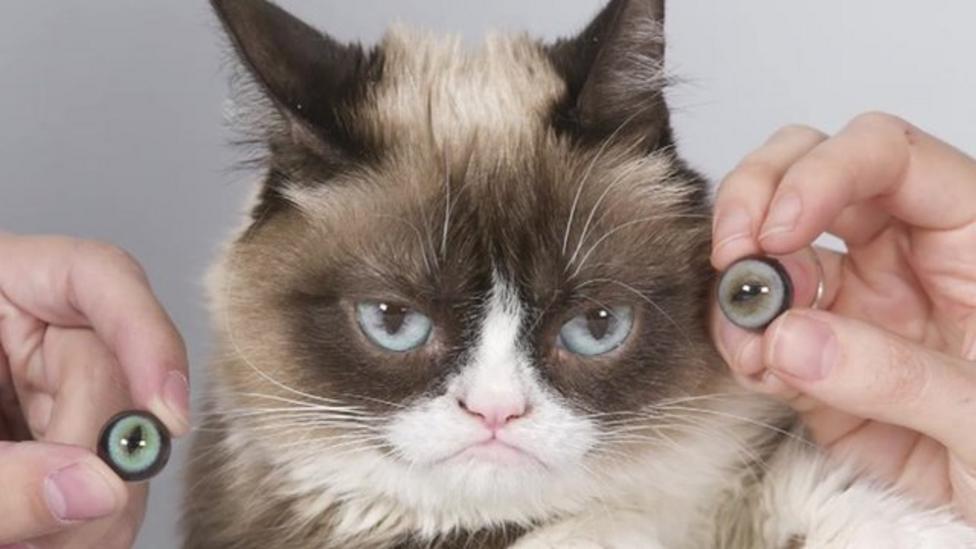 'Grumpy Cat' made at Madame Tussauds