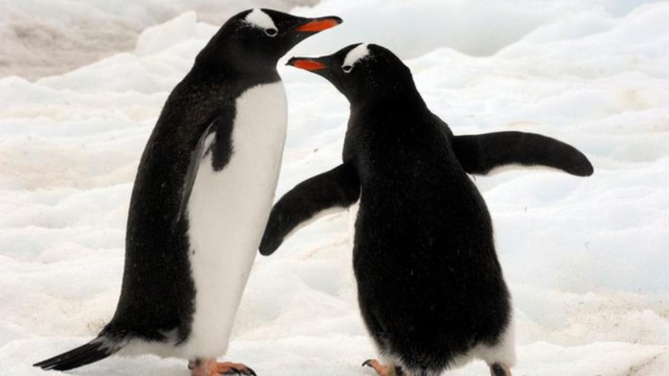 How do you move penguins across Europe?