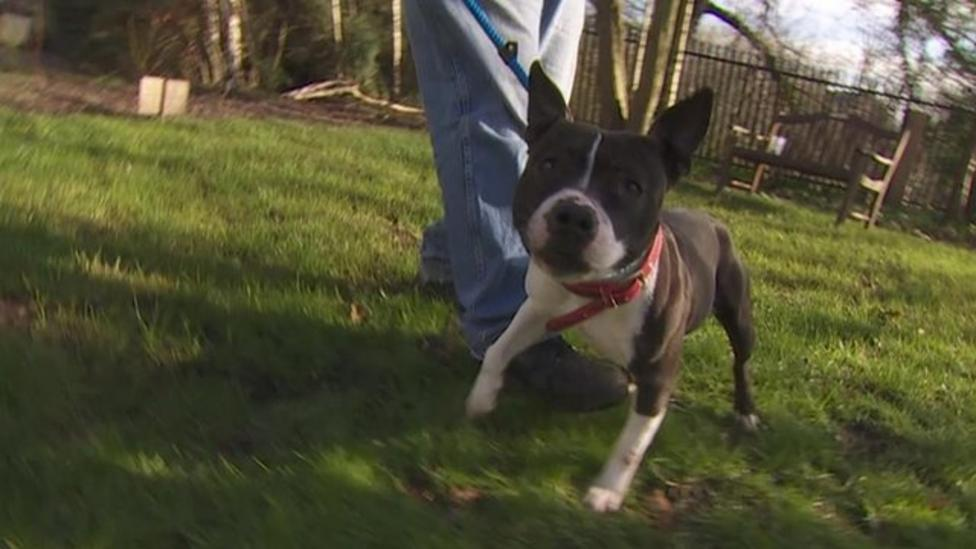 New kennels for dogs who lost home in fire