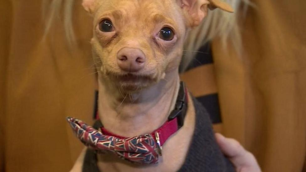 'Ugliest' dog in the world on book tour