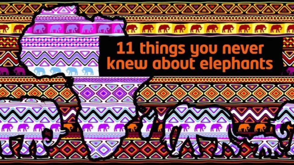 11 things you never knew about elephants