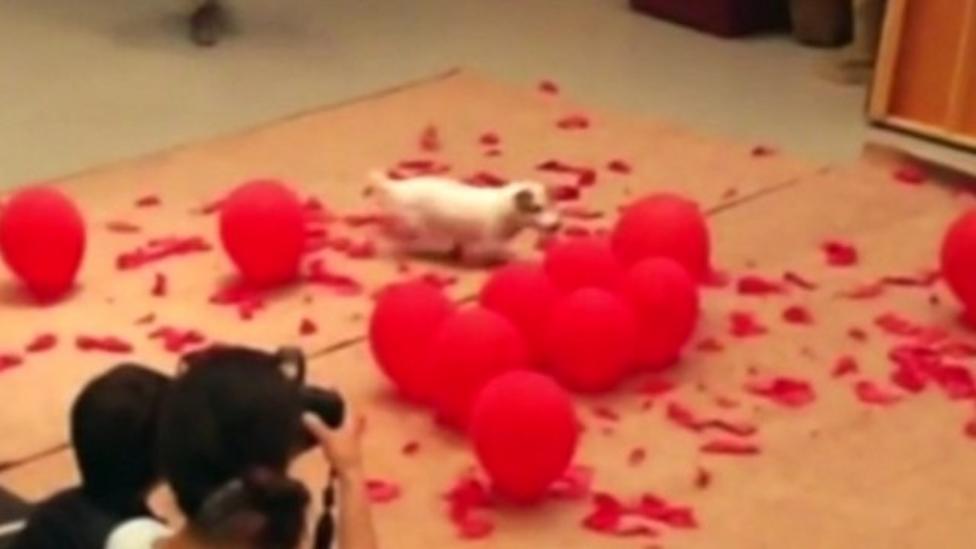 Dog breaks balloon-popping record