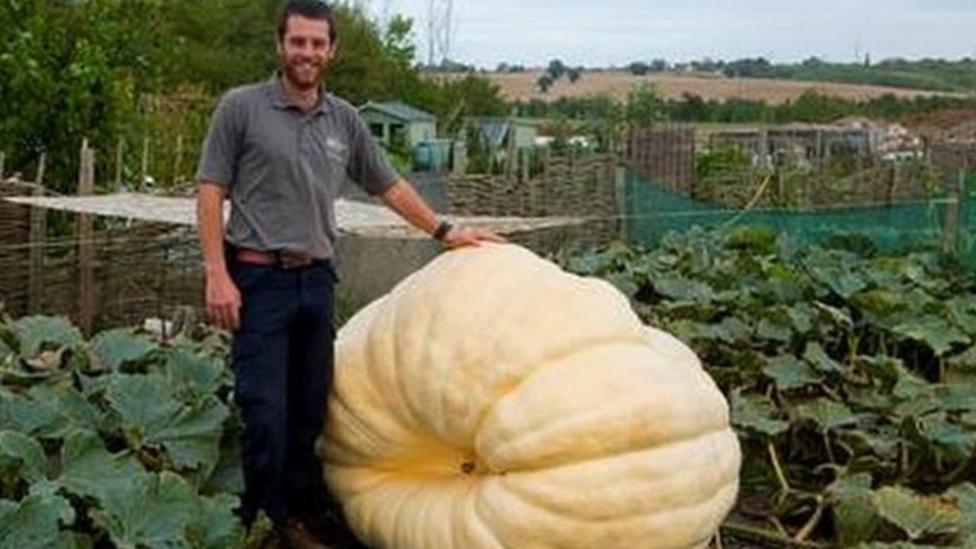 Giant pumpkin breaks UK record