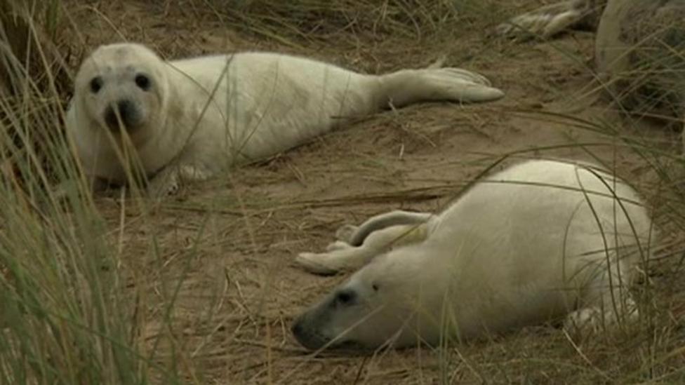 Seal gives birth to rare twin pups