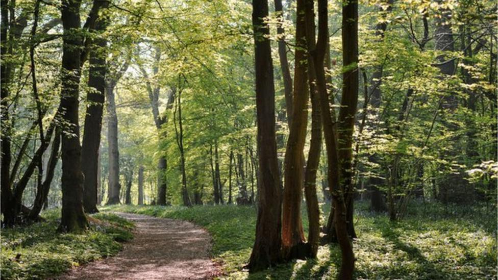 Can trees talk to each other?