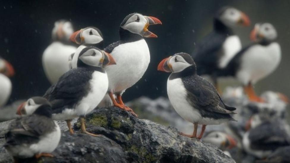 UK birds under threat