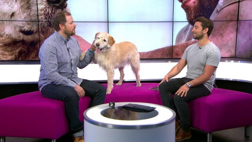 Adventurous dog Arthur crosses Amazon