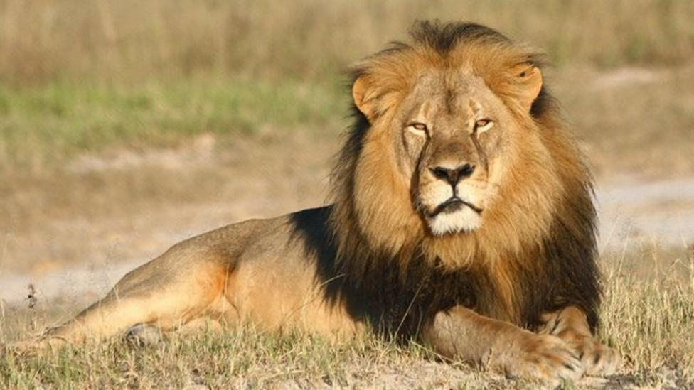 What happened to Cecil the lion?