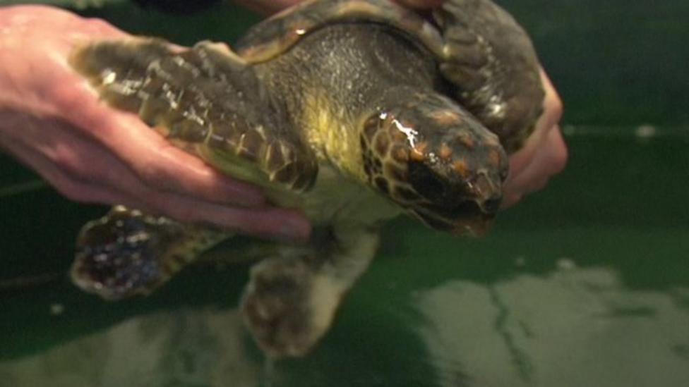 Stranded turtle makes amazing recovery