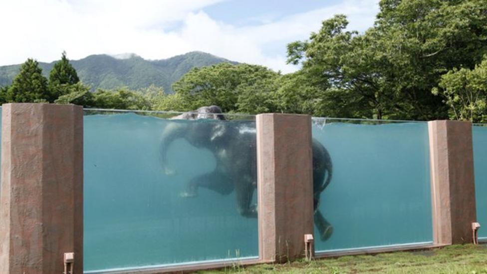 Safari park builds elephant swimming pool